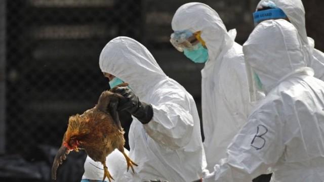 欧洲多国现高致病禽流感疫情