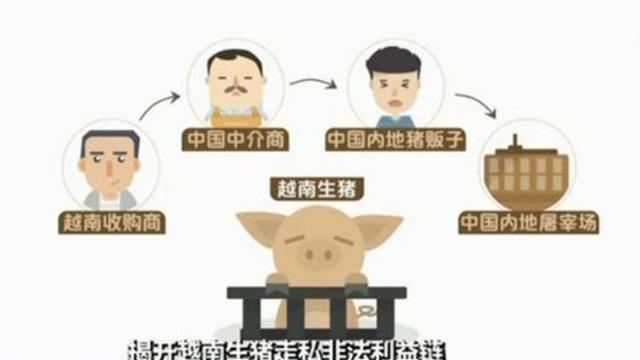 越南生猪走私:交保费可躲过检查