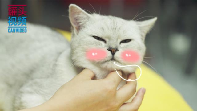 喵星人减压按摩术,简直撩猫神技!