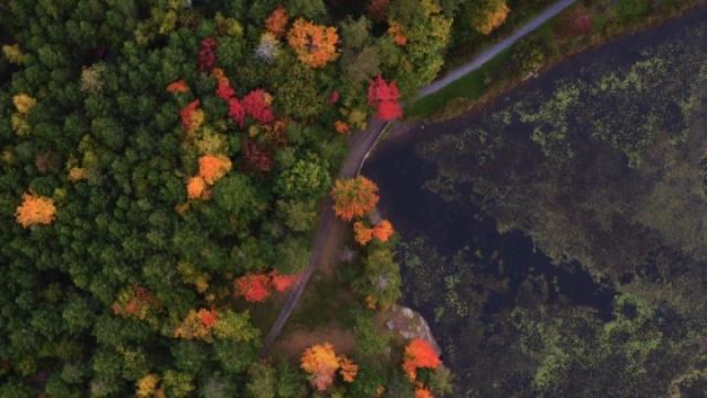 纽约郊区的彩色森林