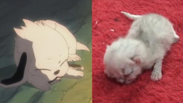怪!双面小奶猫,有三只眼睛两张嘴