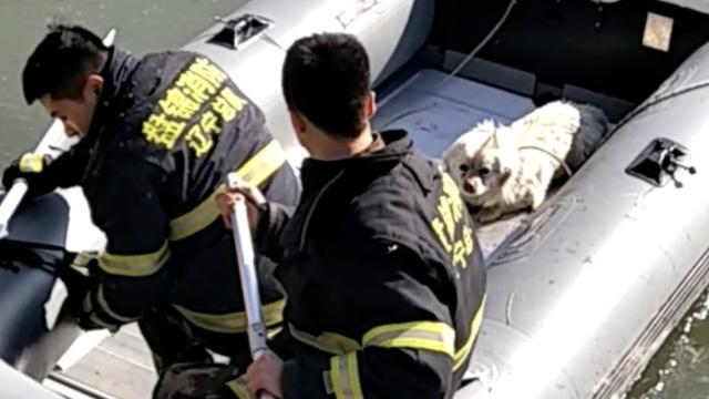 小狗被困孤岛,消防员划船相救