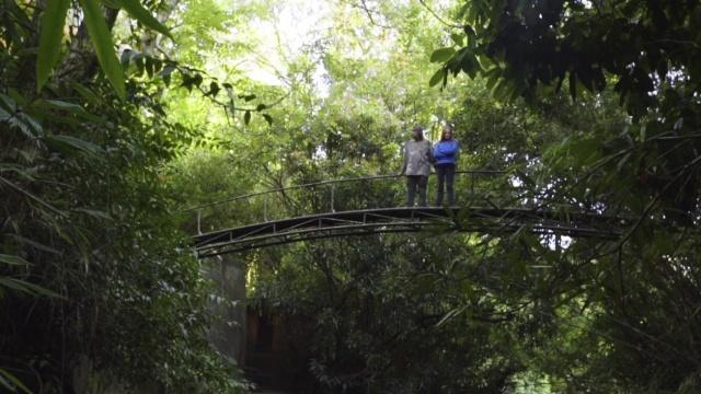 这对夫妻用20年,创造了一片森林