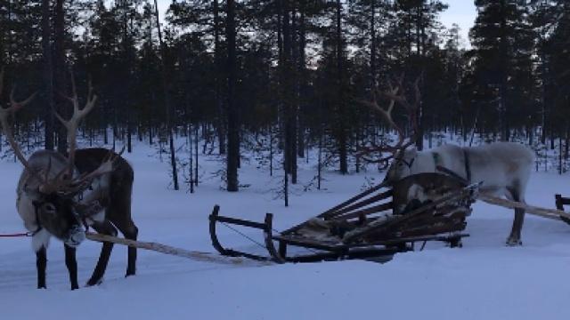 和驯鹿小伙伴们一起看日落