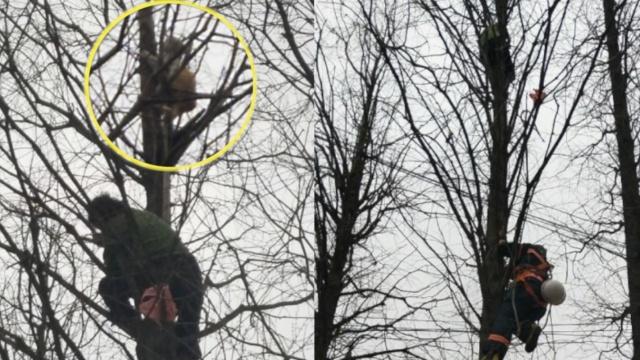 小猫困树上,7旬老太爬树救猫也被困