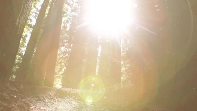 木质能源在改善人们生活