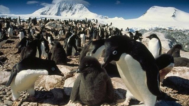 贩卖南极石头,导致企鹅断子绝孙?