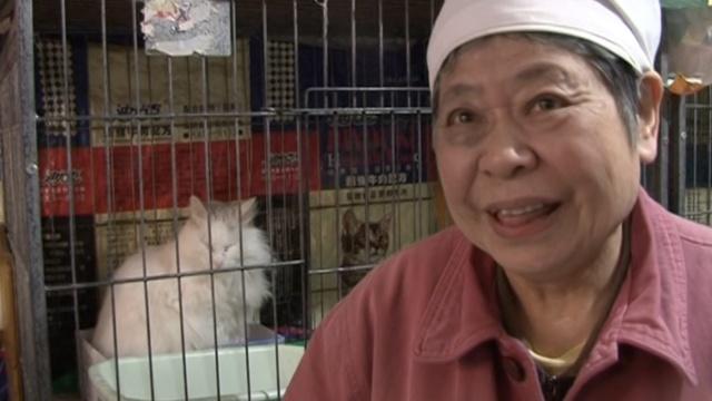 老太收养40只流浪猫:一只也不送人