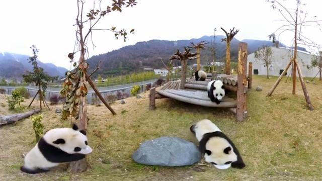 为了团子,中国设有67个保护区