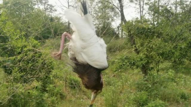 怒!白鹭栖息安家地,他们设网捕鸟