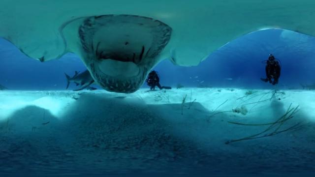 他们潜入海底,和鲨鱼一起游