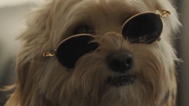 人不如狗:当你的女票爱狗比爱你多