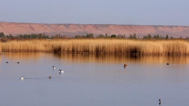 太美!湿地水鸟嬉戏,乐享慢生活