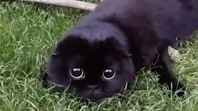 从来没见过这么警觉的黑喵!