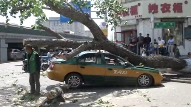 大树倒下砸中出租车,司机跳车逃生