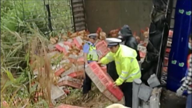 小鸡,别跑!警察蜀黍高速抓507箱鸡