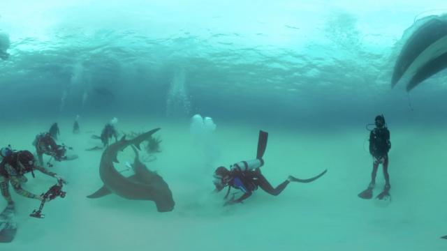 这群小哥疯了,居然下到海底拍鲨鱼