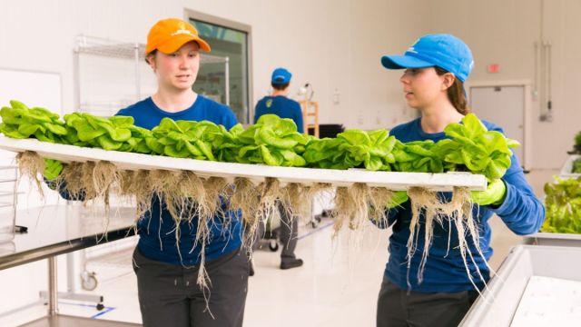 未来世界的农场:轻松想喂饱人类