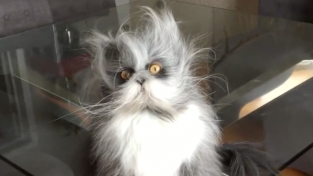 看这只猫,仿佛看到了刚睡醒的自己