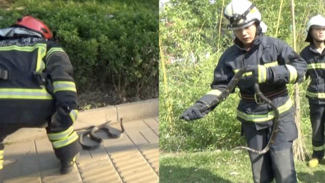 他两天同一地方遇俩蛇,消防徒手抓