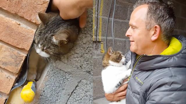 小猫被困墙缝,他救出后归还主人