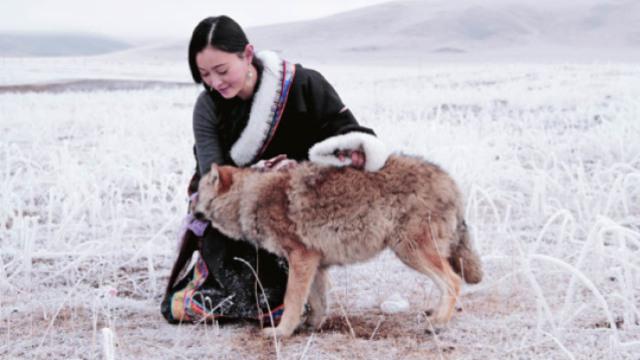 一个女人与狼,七年传奇故事