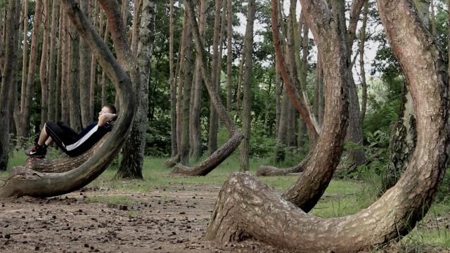 气氛诡异,波兰这片树林都是弯的!