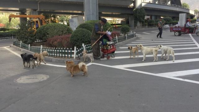 8旬流浪汉拾荒为生,救助6只流浪狗