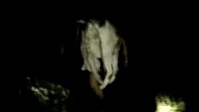 2男深夜上山竹竿钓豹猫,2狗当帮凶