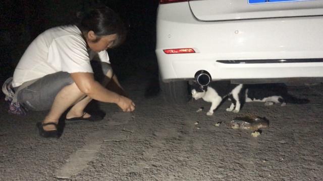 大妈每天上街喂野猫,已收养数十只