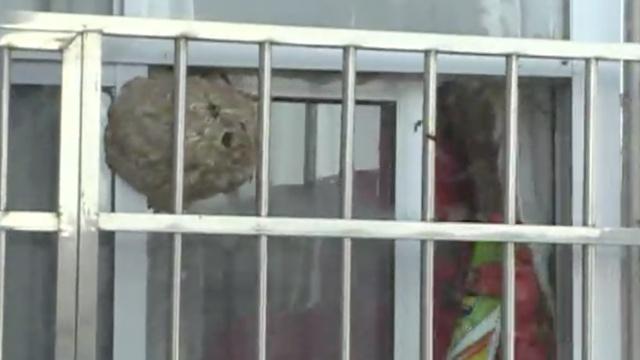 消防掏窗外马蜂窝,住户:怕回来报仇