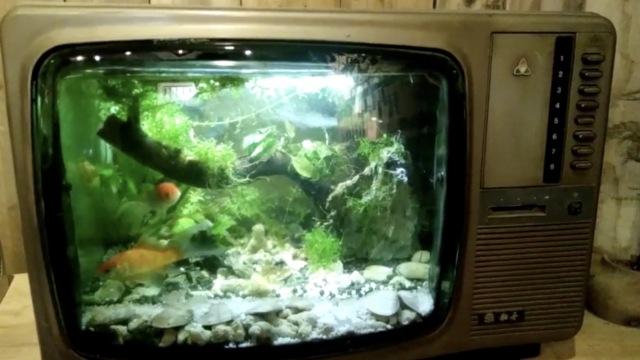 黑白电视里养金鱼,90后小伙真会玩