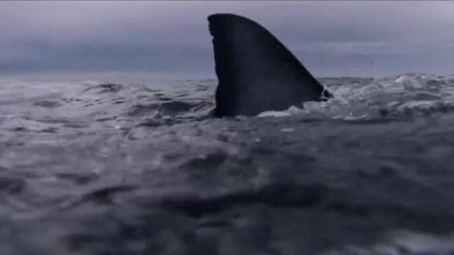 潜行天下:哥斯达黎加—鲨鱼的真相