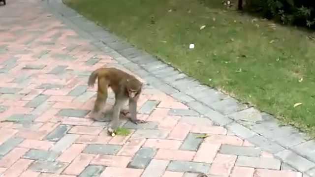 猴哥闹小区,南宁业主再养奇葩宠物?