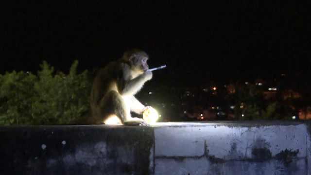 猴哥赖在学校不走,嘴咬笔头想听课