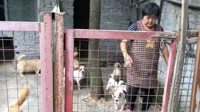 她倾其所有,收养近300只流浪猫狗