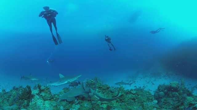 够胆就来!一起在海底与大鲨鱼共舞