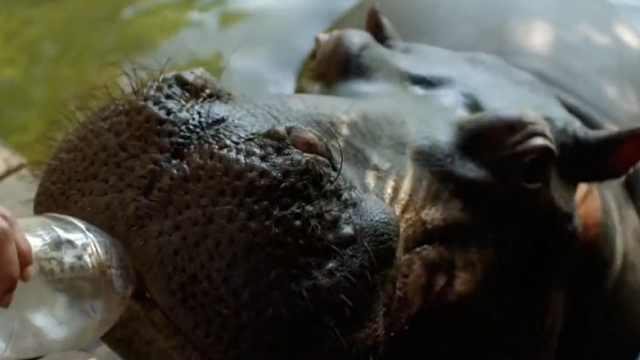 世界上最危险的动物长相十分丑陋!