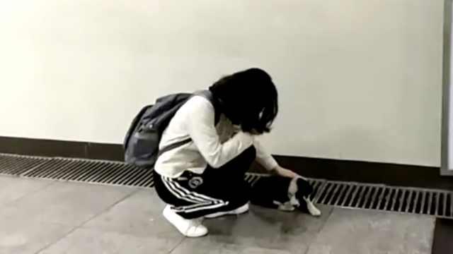 晚安,重庆丨愿所有流浪的狗找到家