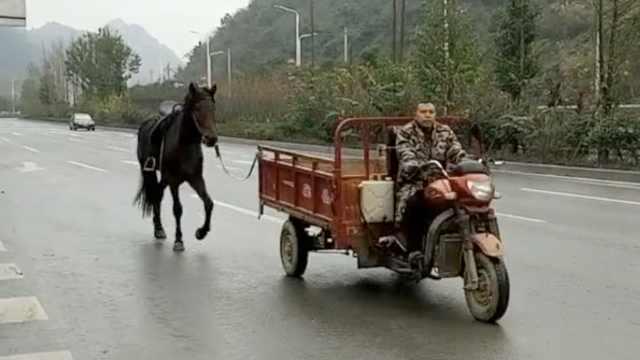 男子骑3轮清晨遛马:锻炼它的肺活量