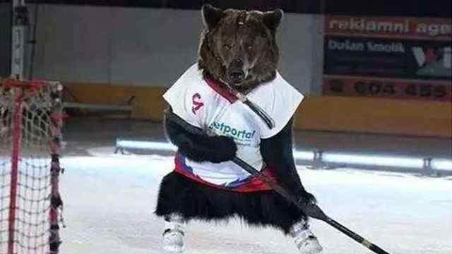 大嘴破冰|冰场有熊出没,小心!
