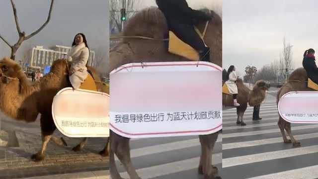 宁夏2美女骑骆驼上班?自称支持环保