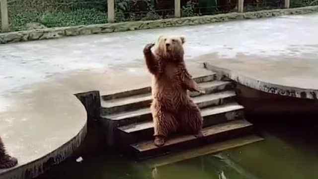 爆笑!狗熊招手让游客给自己投食