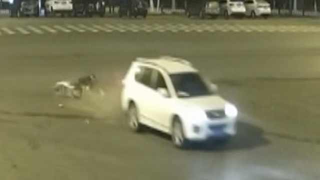 女司机和骑车男同时闯灯,砰!撞了