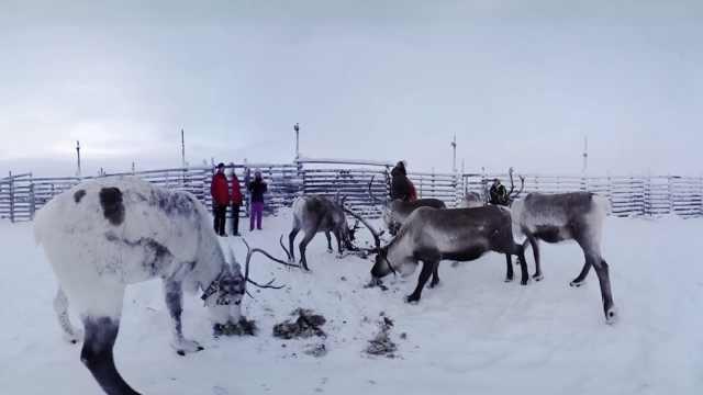 这小镇屠宰食用,圣诞老人骑的驯鹿