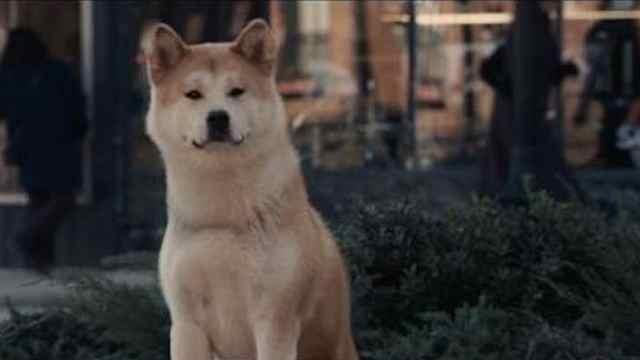 宠物电影推荐《忠犬八公的故事》