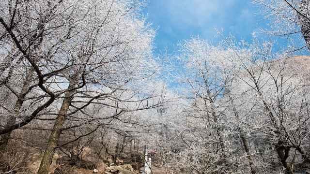 美翻!崂山巨峰雾凇美景,恍若仙境