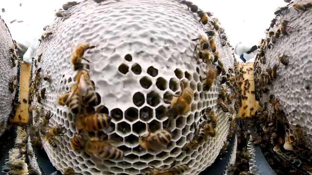 运用科技,养蜂人在荒芜山谷养蜜蜂