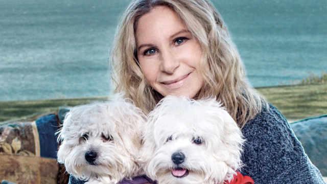 美国巨星花60万,克隆了两只宠物狗