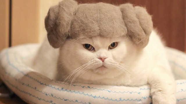 暖爆了!猫咪在主人头发旁亲亲蹭蹭